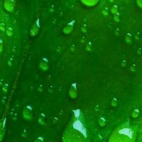 Вольт — победитель банка Зеленых Гоблинов